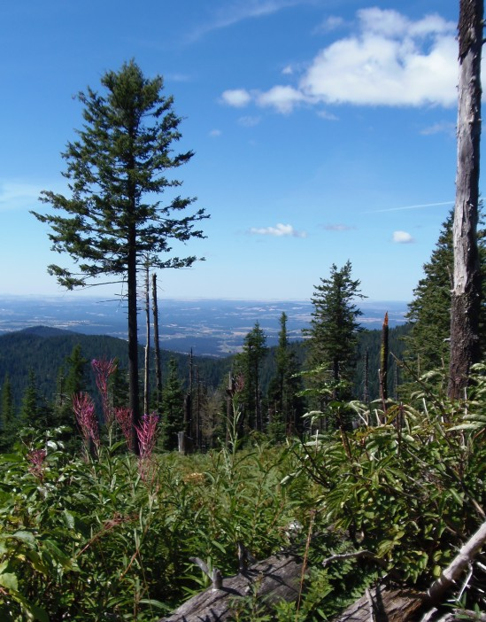 Mt. Spokane - Bald Knob Trail